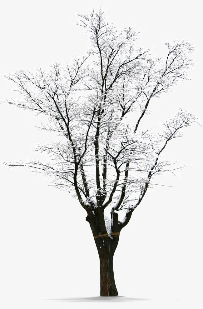 Winter Snow Trees Winter Clipart Winter Tree Png Transparent Clipart Image And Psd File For Free Download Snow Tree Winter Clipart Winter Trees