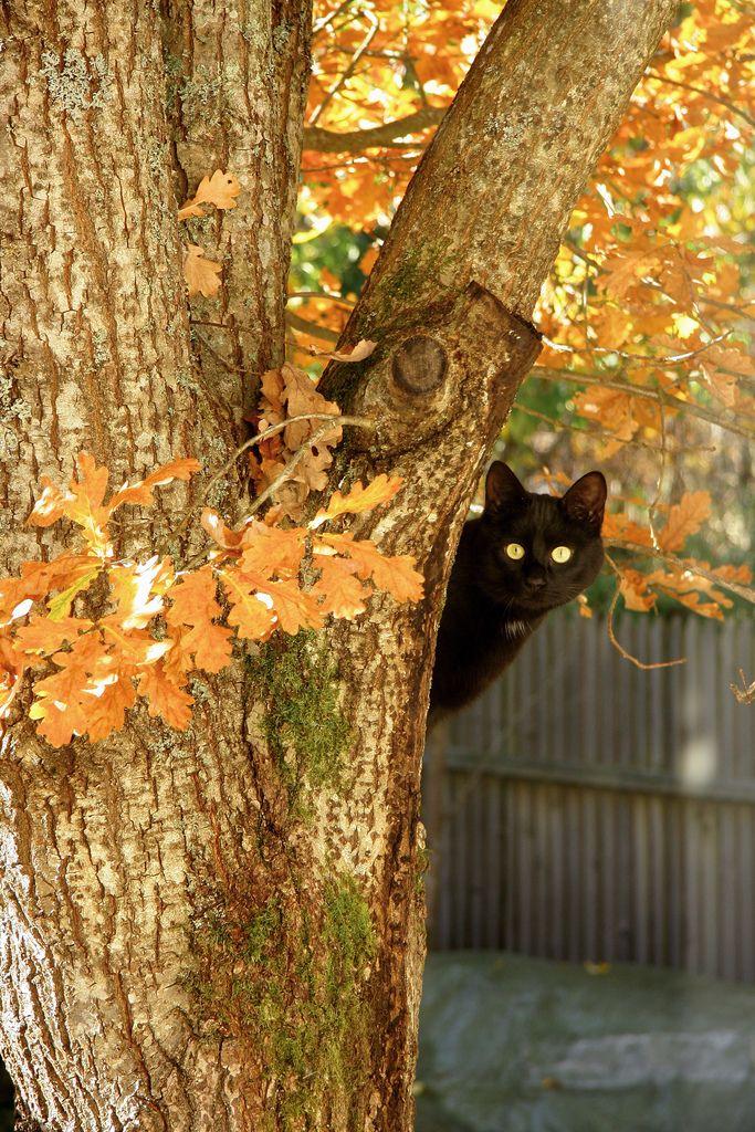 cat lynx autumn foliage - photo #32
