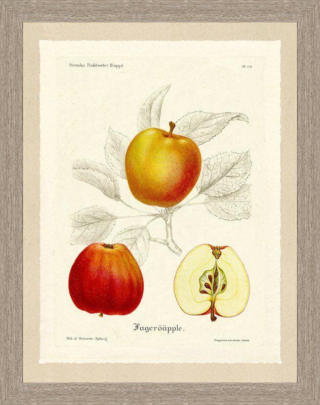 'Apple Sketch' Framed Graphic Art Print
