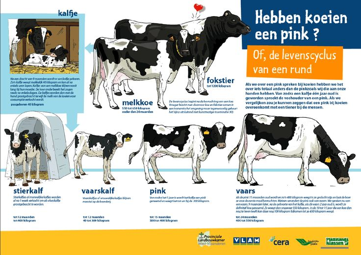 Poster-koeien-pink_orig.gif (1270×899)