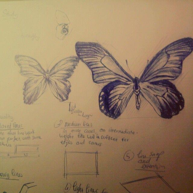 Butterflies study by pen