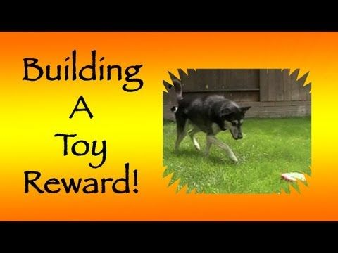"Clicker Dog Training, Pam's Dog Academy www.pamsdogtraining.com  Pamela Johnson, ""Insider Secrets to Canine Freestyle"" San Diego Ca Dog Tricks Too..."