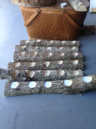 Log candle holders for a backyard wedding DIY would be great as walkway lighting for reception