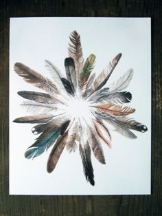 Image result for how to display feathers