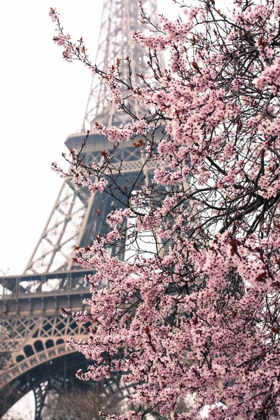 Paris Photography - Paris in the Springtime - Pink Cherry Blossoms Eiffel Tower  - 8x10 Fine Art Photograph - Paris Home Decor - Blush Pink