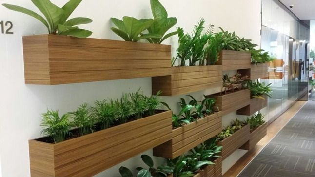 Now transform your workplace into barren to brilliance with the #planthire services offered by foliage indoor #plants >> https://goo.gl/WiX2ZM