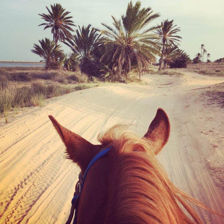 12 choses à faire sur l'île de Djerba - Tunisie - cheval                                                                                                                                                                                 Plus