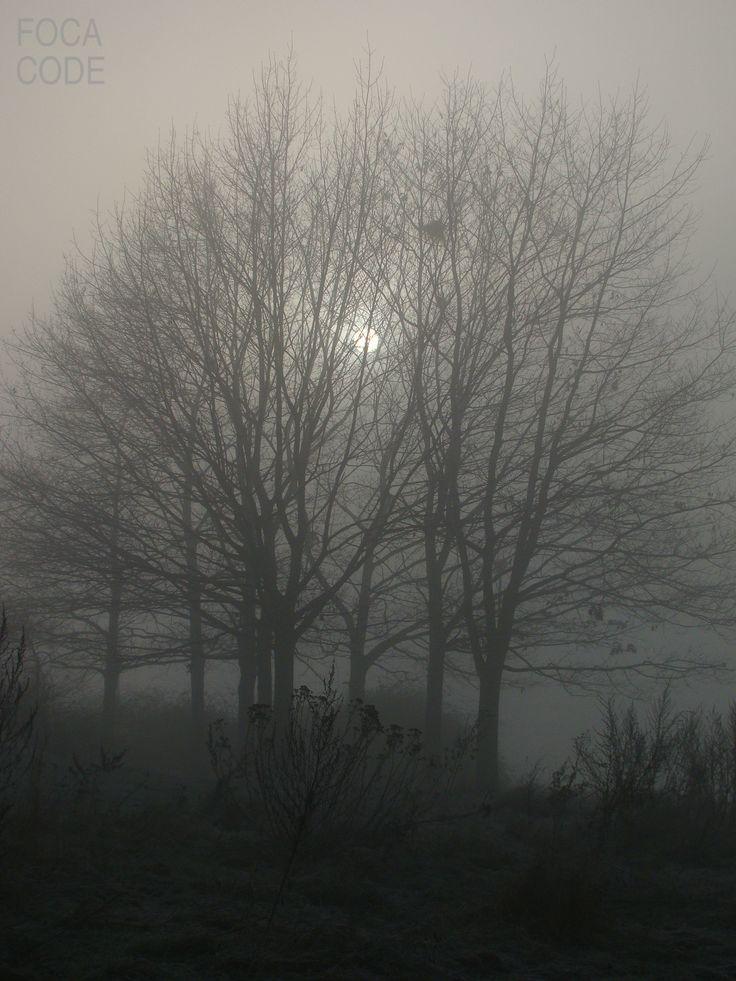 Magiczny wschód Polski - mgła o poranku. The magic of the east Poland - the morning mist. #nature #wilderness