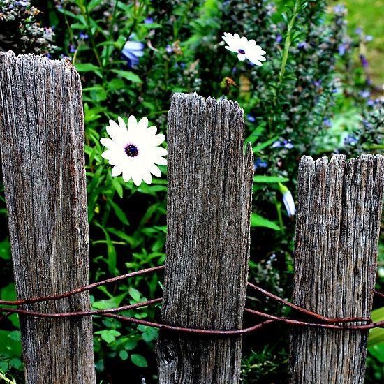 Secret Garden. by le-pamplemousse