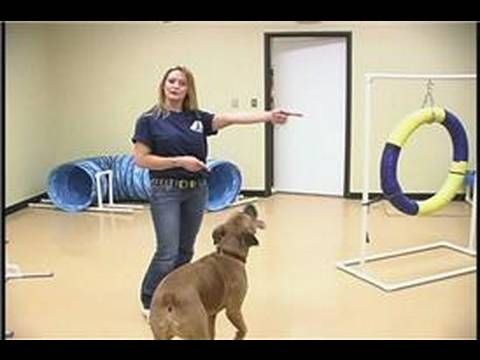Dog Agility Exercises : Dog Agility Training: The Front Cross