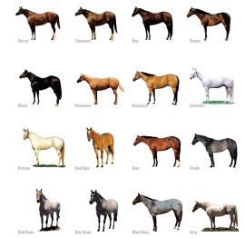 Discover Horses > For Kids > Horse Colors Lesson