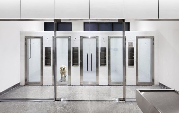 Betwin's animals-over-aesthetics design for veterinary clinic Oasis - News - Frameweb