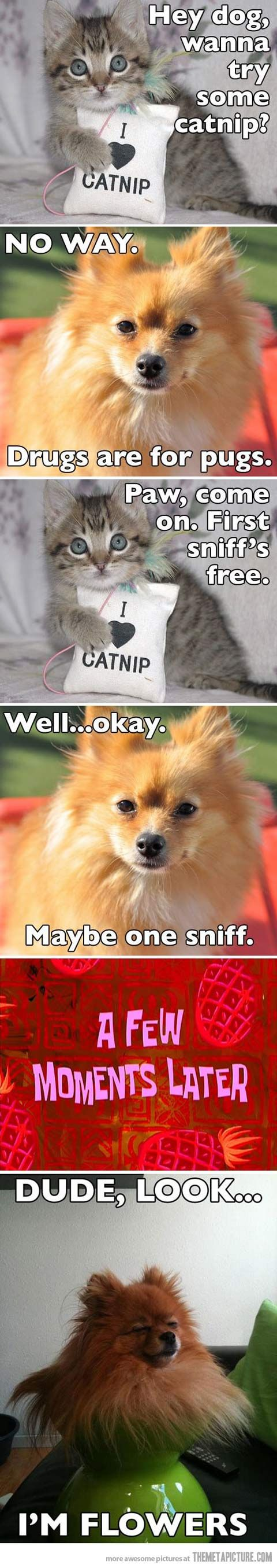 Haha: Animal Jokes, Drugs, Animal Humor, Dogs Cat, Cat Nip Funny, Funny Animal, Funny Puppies, So Funny, Flower