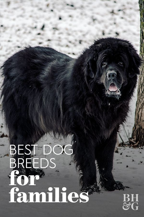 10 Top Dog Breeds For Young Families In 2020 With Images Dog Breeds Top Dog Breeds Dogs