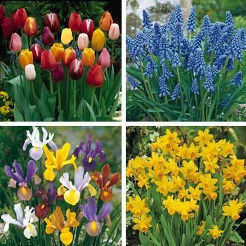 New Spring Garden Bulb Collection Bulbs For Your Garden