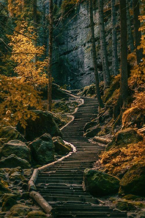 Dark Forest - Sächsische Schweiz, Germany (by inviv0 on 500px) ..rh