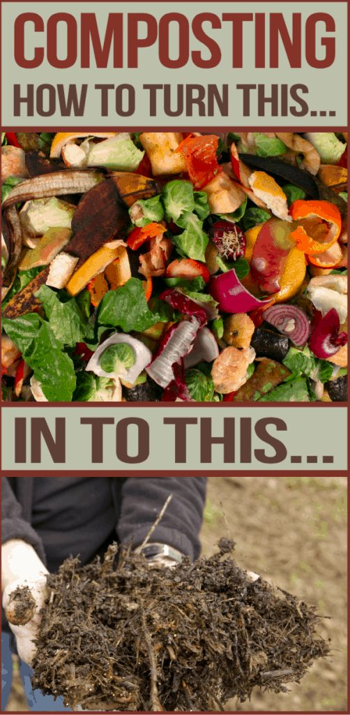 how to take care of compost bin