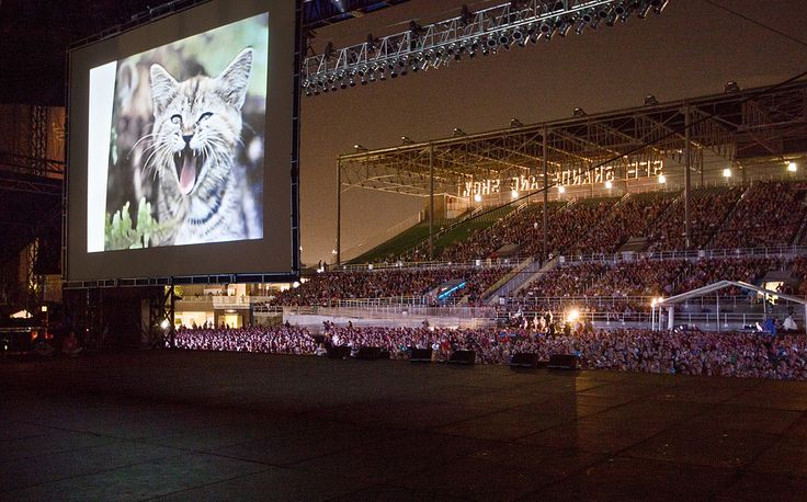 The Internet Cat Video Festival returns, starting in Minnesota and maybe stalking your way.