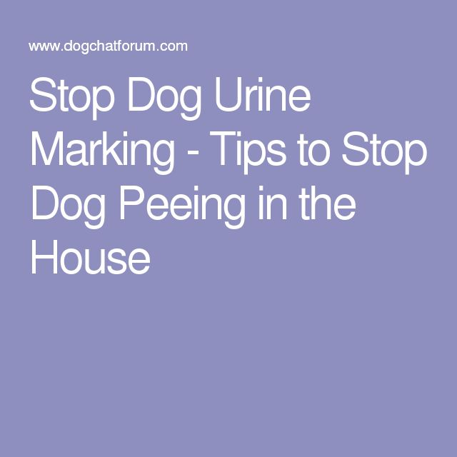 Stop Dog Urine Marking - Tips to Stop Dog Peeing in the House