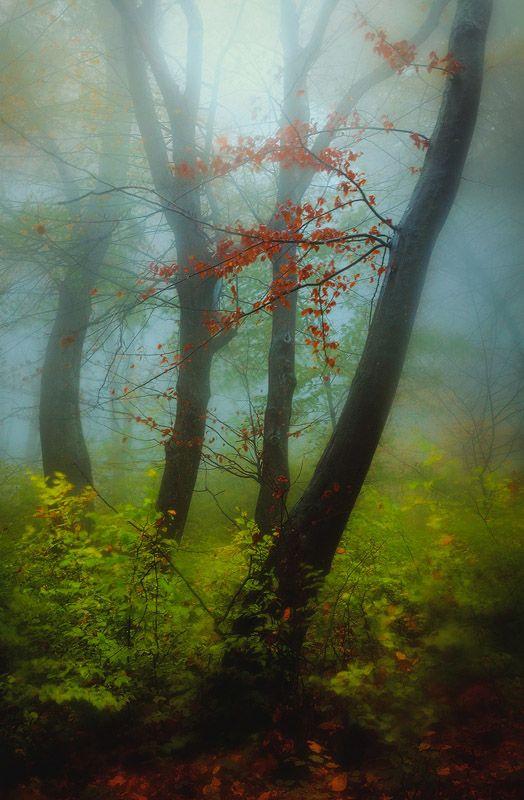 Untitled by Serban Bogdan on Art Limited