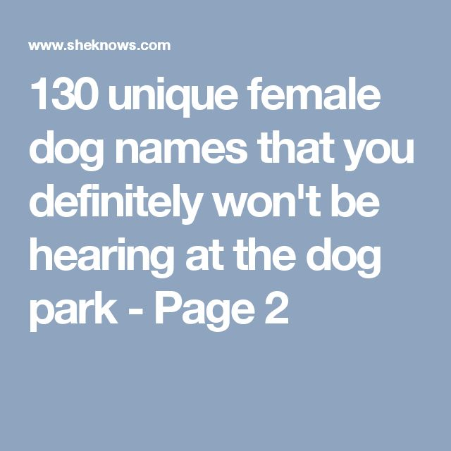 130 Unique Female Dog Names That You Definitely Wont Be Hearing At The