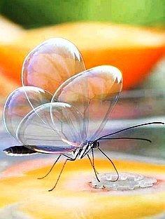 ✯ Bubble Wings Butterfly