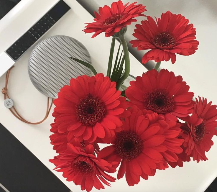 Amazing shot shared by yadavrahul on Instagram! BeoPlay A1, Beoremote 1 and flowers to create a perfect harmony of red, white and black shades!