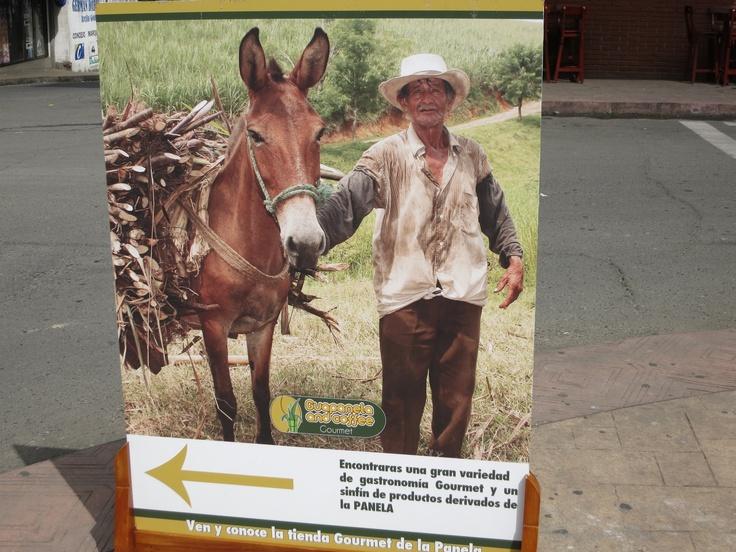 Classic Panela Farmer Photo