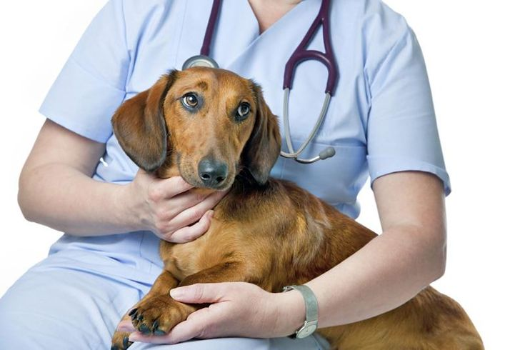 How Diet Affects Dogs with Chronic Kidney Disease