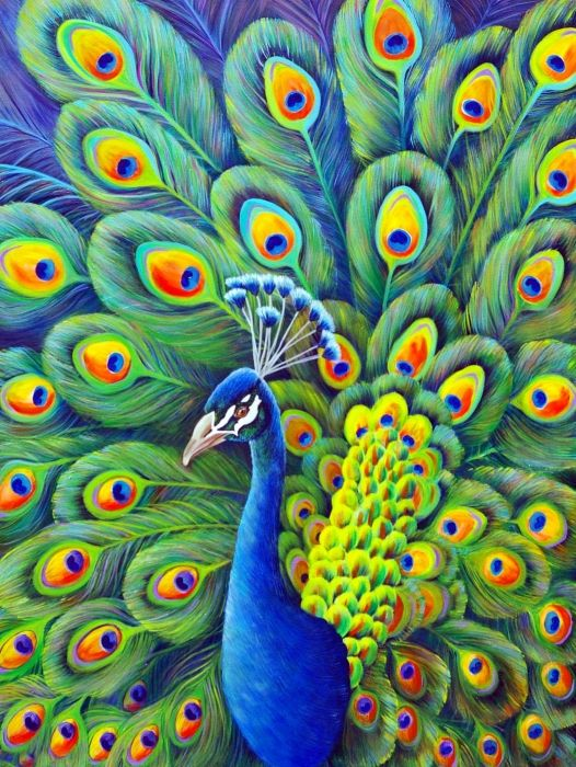 58 best images about peacock on pinterest peacocks for Easy peacock paintings