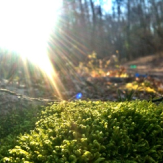 #moss @ #roteryparkRoterypark, Pics, Moss