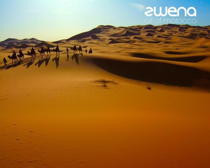 #Moroccan marvel - the #desert   #sun #sky #nature #beauty #animals #exotic