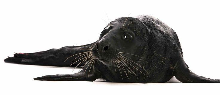 Een mela-watte? Melanisme. Term voor dieren geheel zwart van kleur zijn, omdat ze te veel van het pigment melanine aanmaken. Meer weten over melanisme? Kijk op onze site!