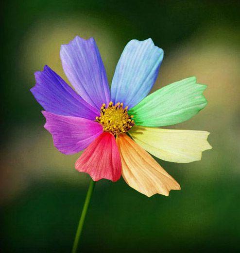 позитивный цветок