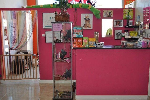 Decoracion para peluqueria canina buscar con google peluqueria pinterest doggies - Decoracion para peluqueria ...