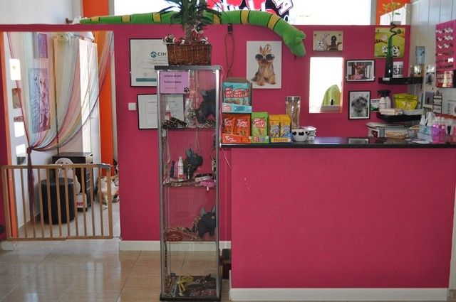 Top 55 ideas about peluqueria on pinterest two dogs - Decoracion de peluqueria ...