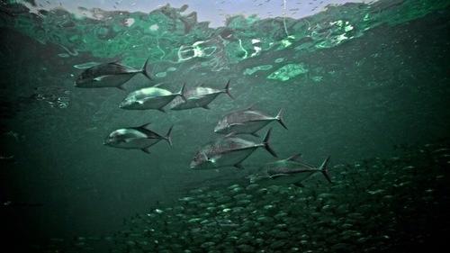 Fish around the dock.