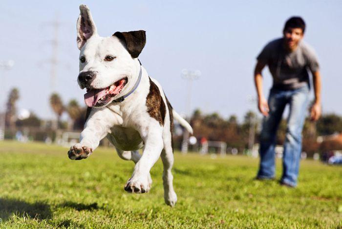 Detener el ladrido de su perro Traqueteo con una lata o estallido Lo que requiere El traqueteo con una lata o estallido puede ser un método de entrenamiento, puede ser eficaz para ayudar a entrenar a su perro a no ladrar. Se requiere una lata de refresco vacía. Usted pone …