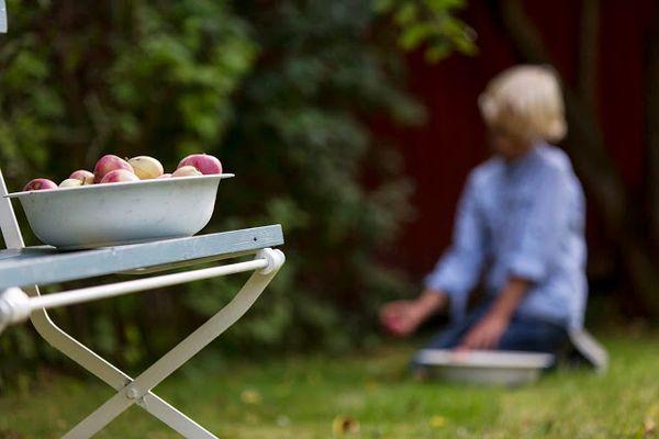 blå bænk med æbler - bænk fra Living by Heart