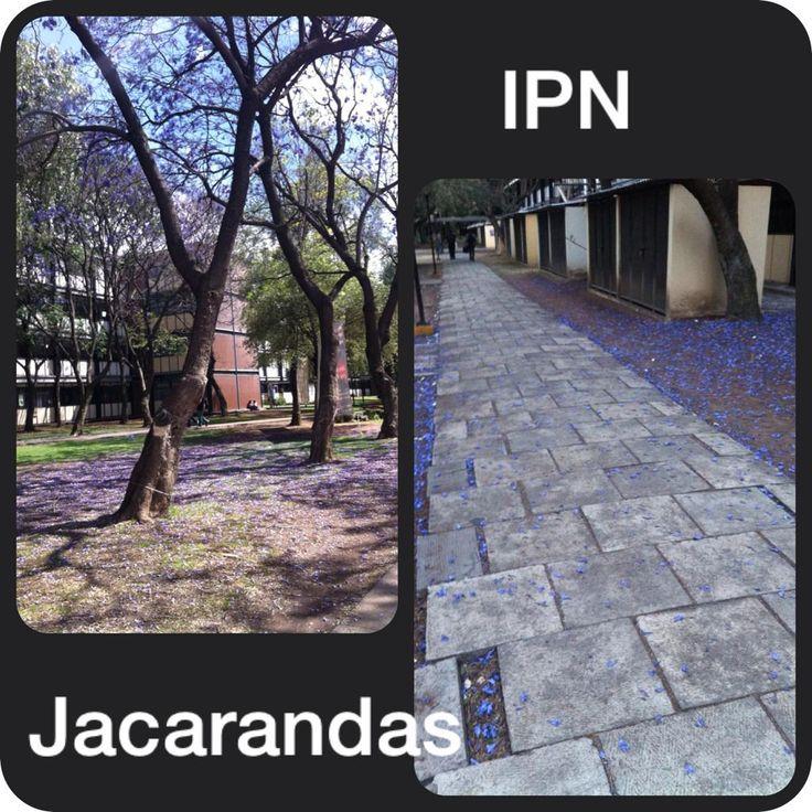 Yam jim nez on ipn espectaculos y maravilla for Ciudad com ar espectaculos