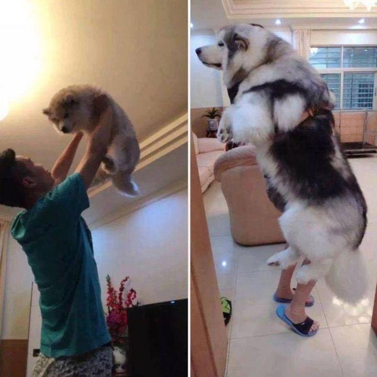 15 Fotos increíblemente tiernas de personas abrazando a sus perros cuando son cachorros y cuando son adultos: #foto #fotos #perros #perro #cachorros #cachorro #animales #animal #mascota #mascotas #photo #cute #cuteanimals #cutedogs #cuteness #dog #dogs
