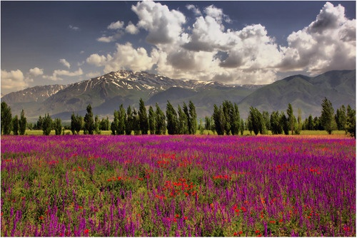 Flowers and Mountains Erzincan, East Anatolia, Turkey
