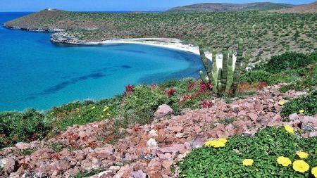 HD Oceans Nature Wallpapers Baja California Baja