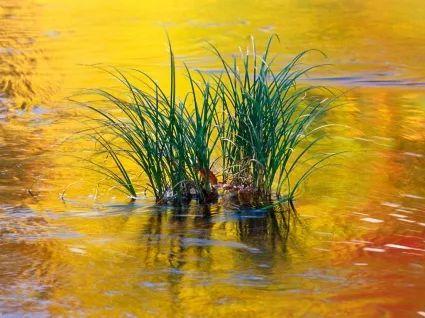 PRANOSTIKA NA ŠTVRTOK 18.5.: Májové blato, pre hospodára zlato.