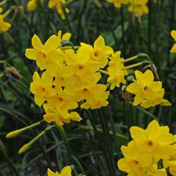 56 besten gelb bilder auf pinterest garten gelb und gelbe. Black Bedroom Furniture Sets. Home Design Ideas