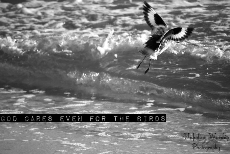God made even the birds. Copyright: Unfading Worship Photography Taken and Edited By Sarah Myers