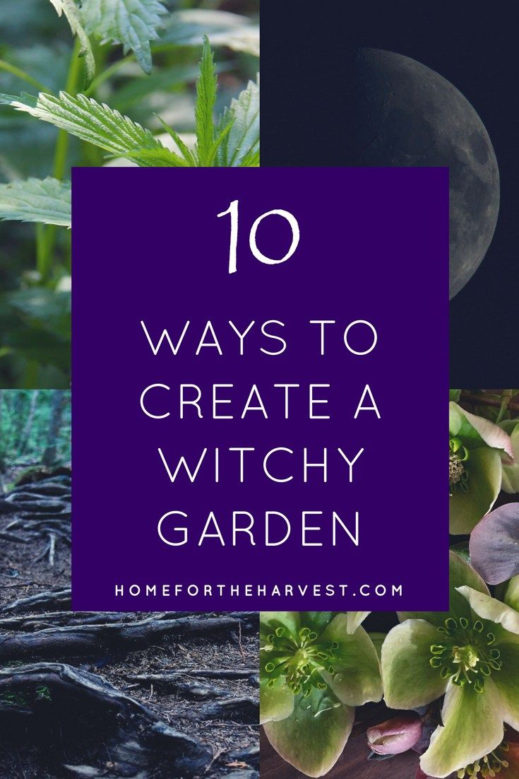 10 Ways to Create a Witchy Garden - How to grow your own witch's garden by the moonlight with herbs and other magical plants | Home for the Harvest *potential plants