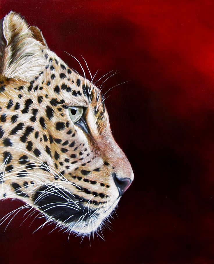 THE LADY IN RED - Leopard, oil on canvas, 50x60