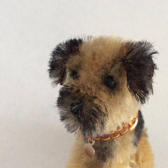 Charming Little Border Terrier Puppy Dog Entirely Reverse Hand