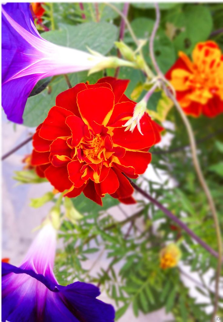 Flowers, Estepona, Spain